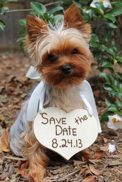 Save the date with pets