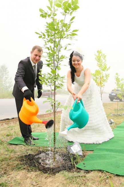 Посадка дерева - традиция деревянной свадьбы