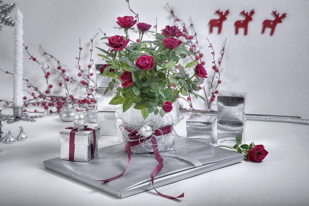 Подарок к новому году любимой ksaaprogramsru